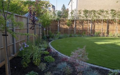 Basic Landscaping Tips for Beginners